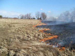 В Смоленской области за сутки произошло 13 возгораний сухой травы