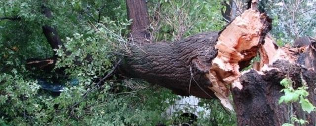 На 68-летнюю смолянку рухнуло дерево