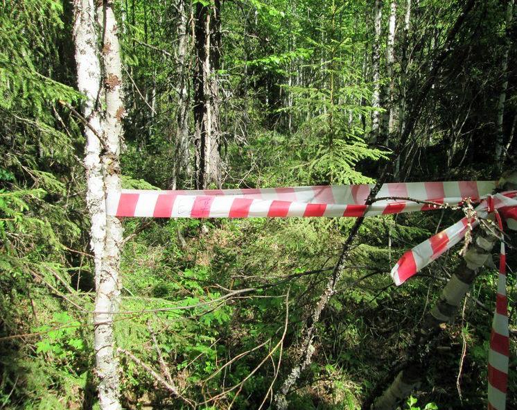 В Смоленской области нашли тело 81-летней женщины, пропавшей девять месяцев назад