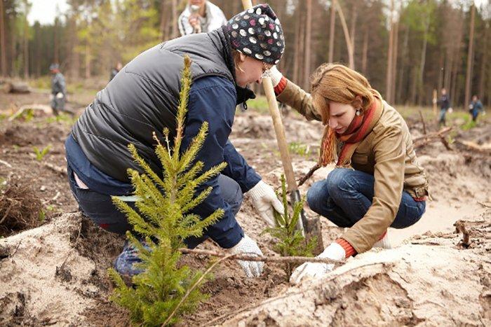 Смоленские леса пустили в рост