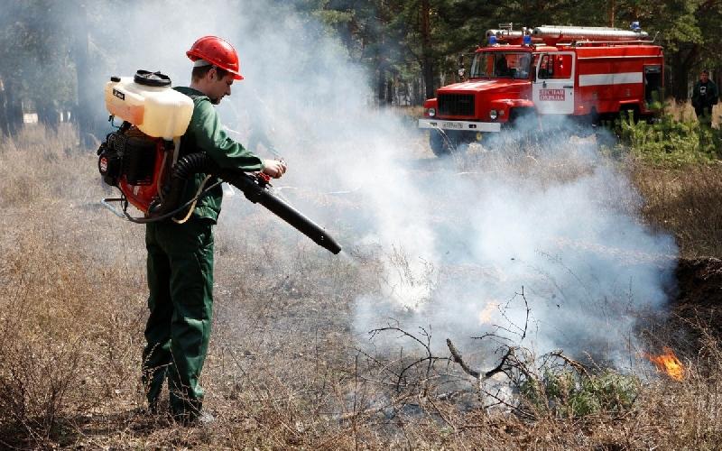 В 2017 году на территории области сократилось количество возгораний