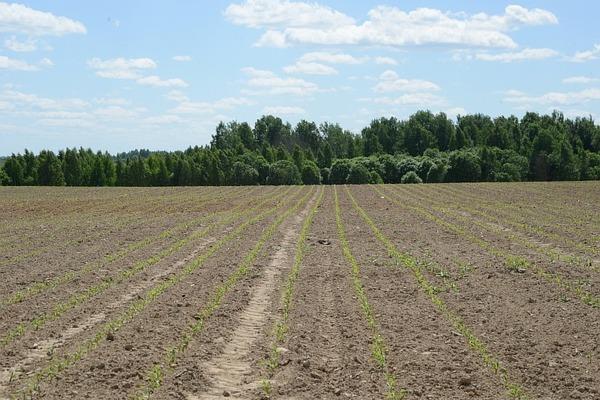 Губернатор Алексей Островский договорился об оказании помощи смоленским аграриям накануне посевной