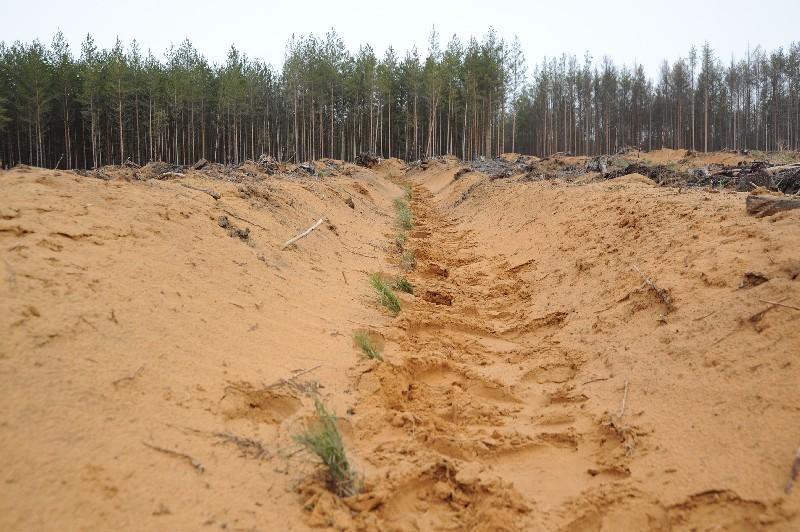 В Смоленской области полным ходом идут лесовосстановительные работы