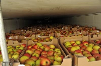 Смоленские таможенники за выходные задержали 120 тонн «санкционки»