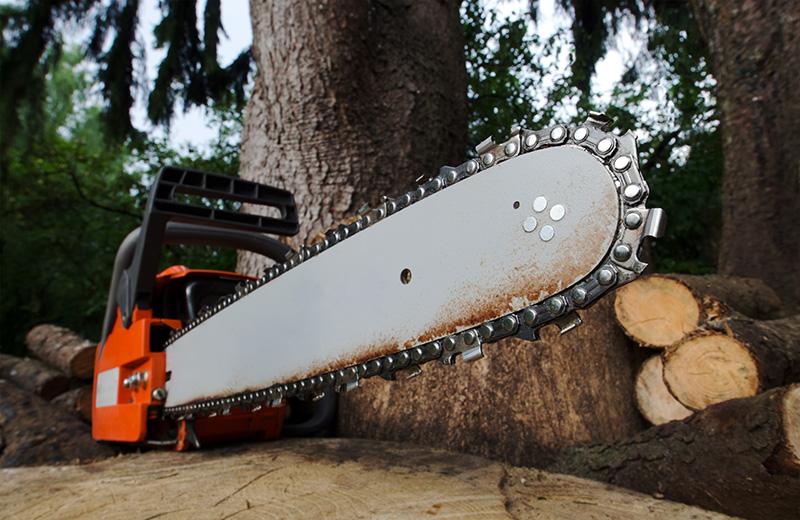 Смолянин угрожал бензопилой соседке, мешавшей ему спилить деревья, чтобы парковать свое авто