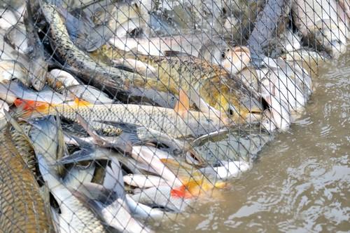 Смоленские полицейские задержали браконьеров, ловивших рыбу сетями в месте нереста