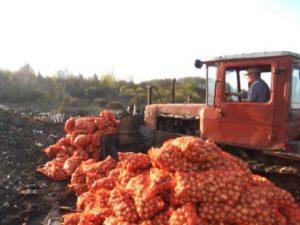 В Смоленской области уничтожили больше тонны лука
