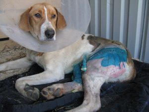 Сотрудники ГИБДД рассказали, как спасали сбитую на трассе М1 в Смоленской области собаку