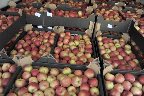 Смоленские таможенники задержали 20 тонн санкционных яблок