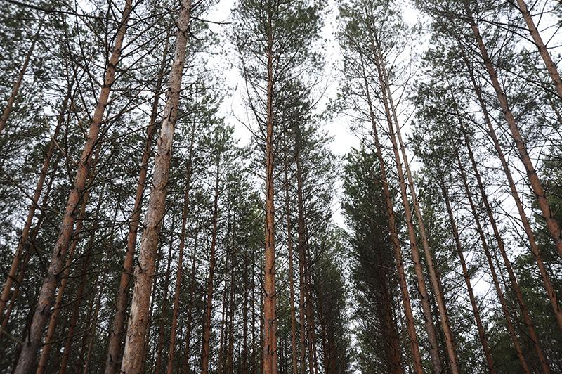 Смоленские пожарные проводят патрулирование лесного фонда