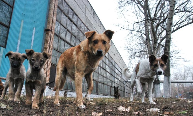 В Смоленске решена участь бездомных собак