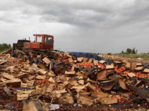 В Смоленской области за два дня уничтожили более 146 тонн яблок