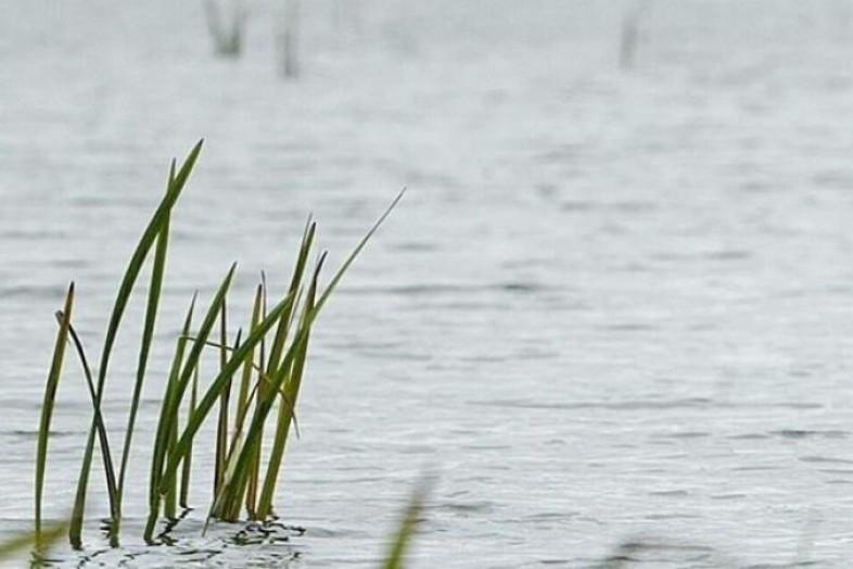 В Смоленской области рыбак нашел тело ребенка, утонувшего в начале мая