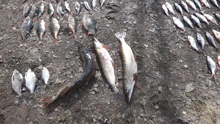 В Смоленской области у браконьеров изъяли более 1,3 тонны рыбы