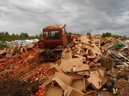 В Смоленской области уничтожили более 61 тонны яблок