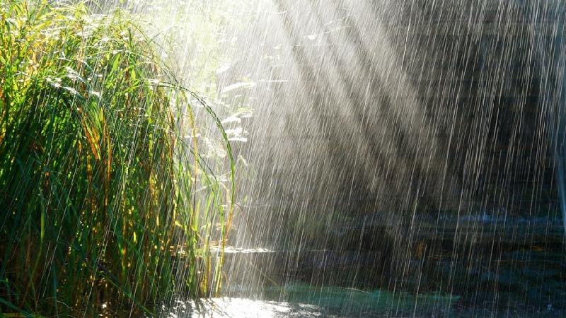 21 июня в Смоленской области будет дождливо и ветрено