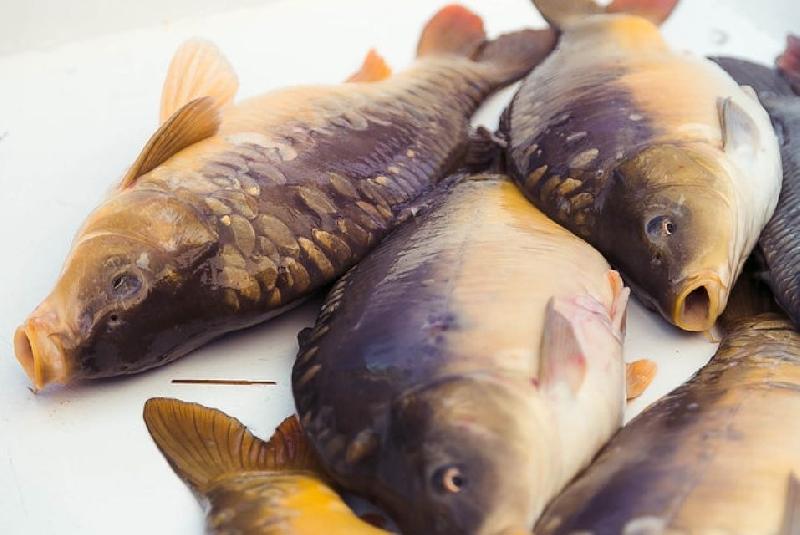 В Смоленской области москвичи попались на незаконной ловле рыбы