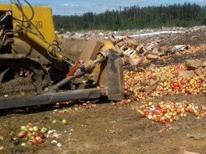 В Смоленской области уничтожили восемь тонн яблок и томатов