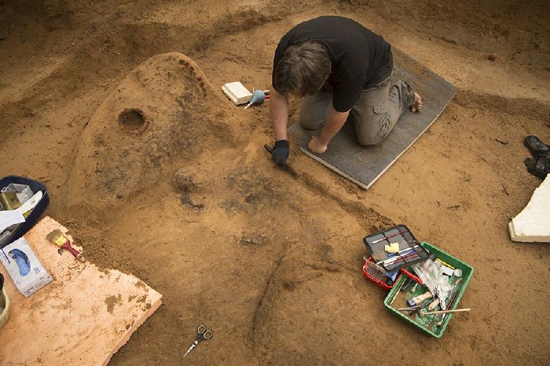 Археологи нашли в Гнездове деревянный щит