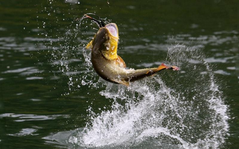 «День Рыбака» в Смоленске пройдет 9 июля