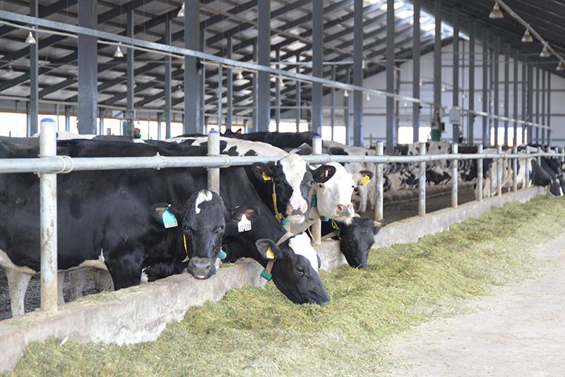 В Смоленской области поддержат развитие молочного животноводства
