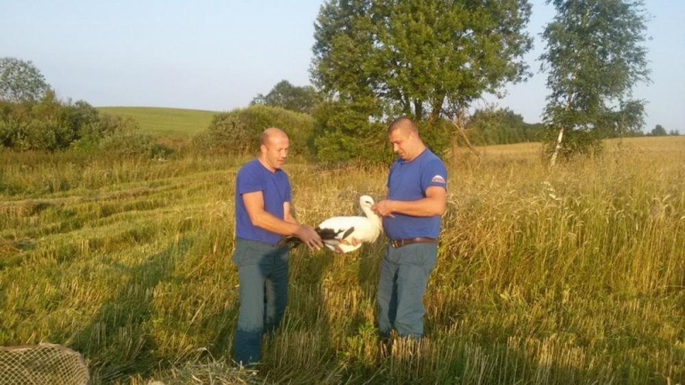 В Смоленской области пожарные спасли от гибели раненого аиста