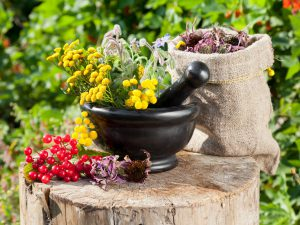 Популярные растения народной медицины