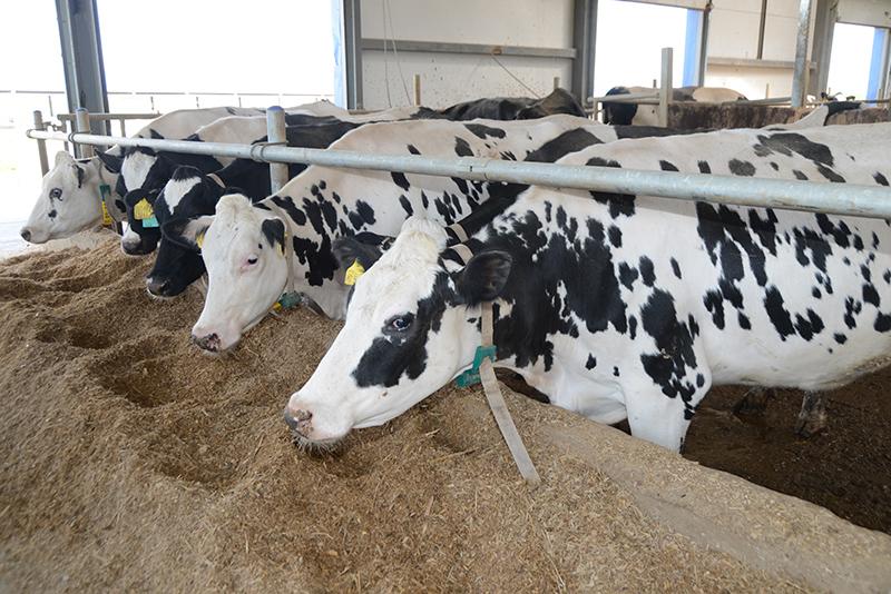 На Смоленщине стремительно увеличивается производство сельхозпродукции