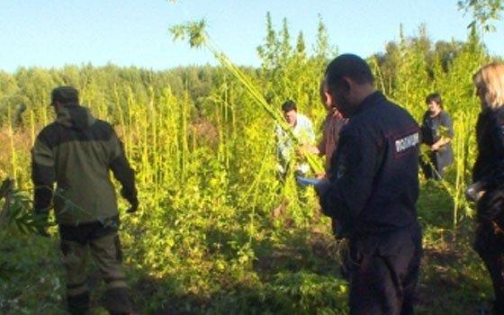 Более 28 кило марихуаны и 100 килограммов конопли изъяла у троих смолян полиция