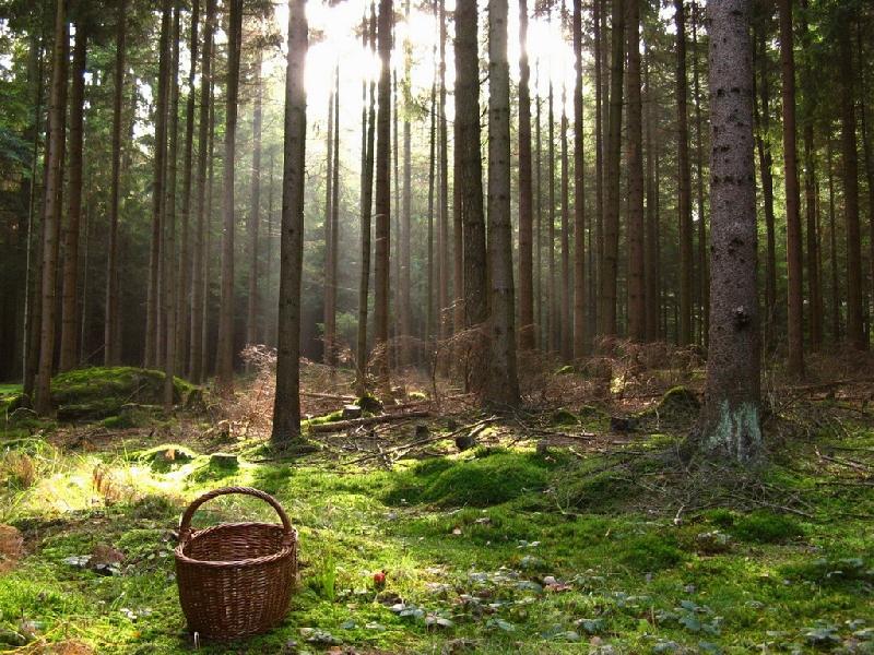 В Смоленском районе третьи сутки ищут заблудившегося грибника