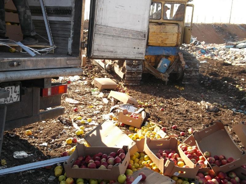 Смоленские таможенники уничтожили 18 тонн санкционных яблок