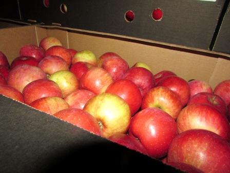 Несколько фур яблок развернули на смоленской границе обратно в Белоруссию