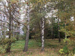 В Смоленске на месте березовой рощи напротив Реадовского парка хотят построить многоэтажку