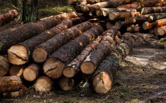В Смоленской области полицейские раскрыли незаконную порубку леса