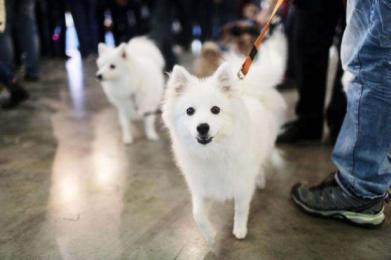 Смолян обяжут регистрировать домашних животных?
