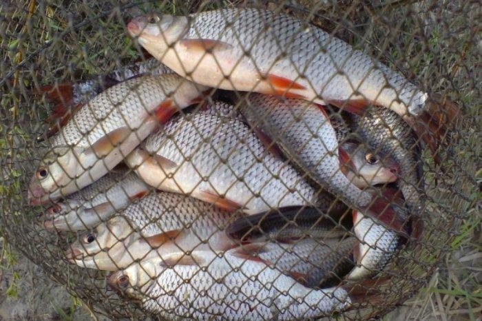 В Смоленской области поймали «рыбных» браконьеров