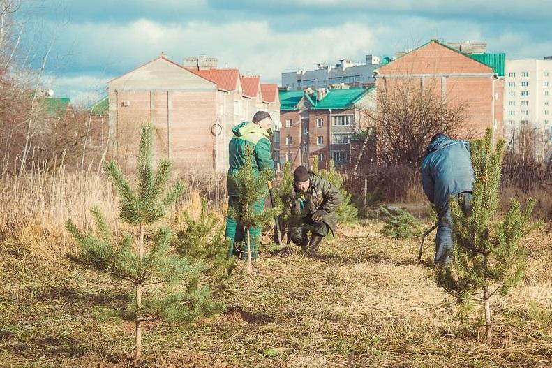 В Смоленске в Соловьиной роще высадили 50 саженцев сосен