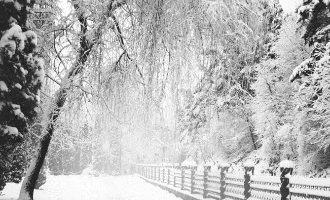 Ночью – спецтехникой, днем – руками. Как парки Смоленска очищают от снега