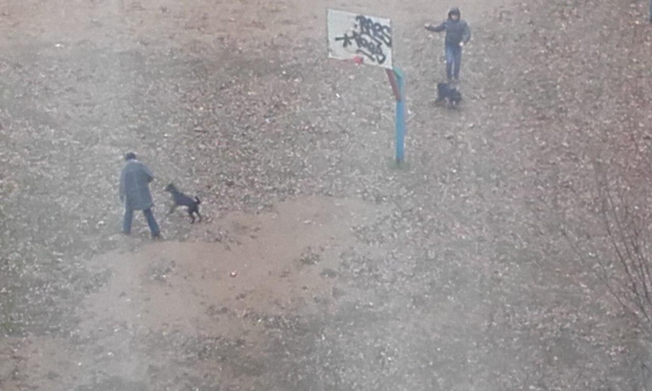 В Смоленске собак выгуливают на детской площадке