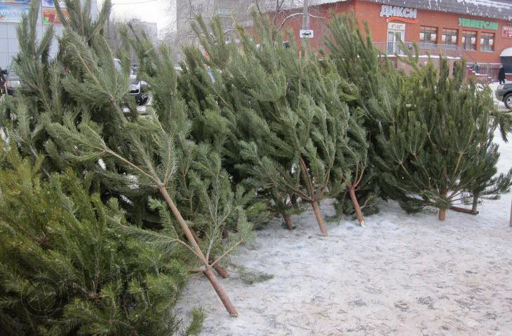 Где в Смоленске разрешено торговать новогодними елками