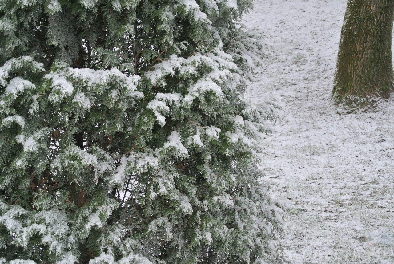 В 2017 году в Смоленской области высажено более 8 миллионов деревьев