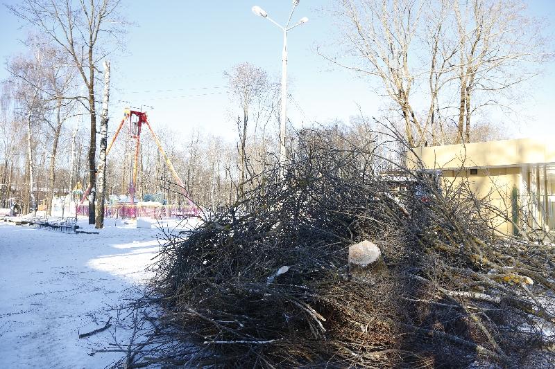 Зачем в центральном парке Смоленска пилят деревья