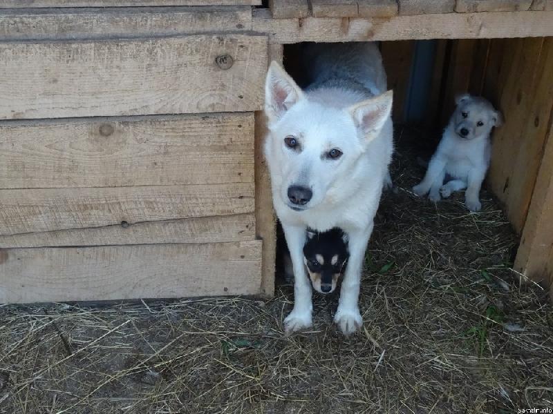В Смоленске построили пункт временного содержания бездомных животных