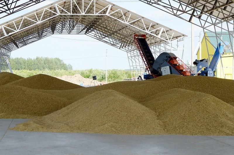 В Смоленском регионе увеличилось производство зерна