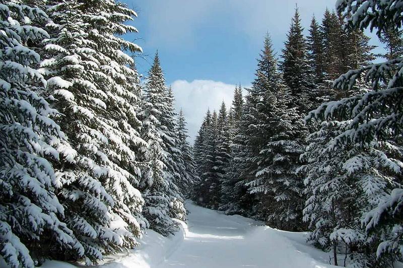 В Смоленской области подвели итоги операции «Новогодняя ель»