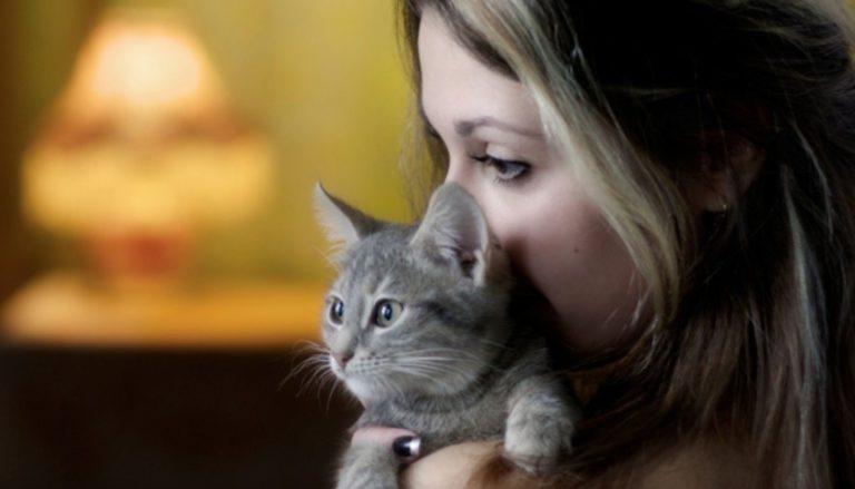 Как в Смоленске найти съемное жилье с котом