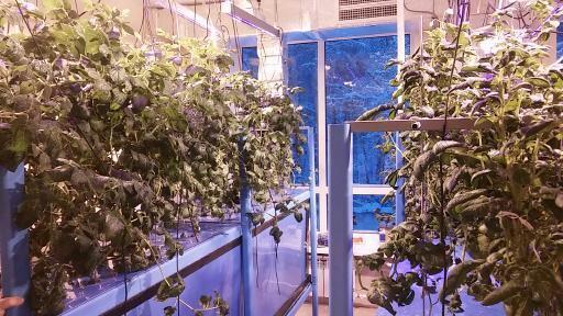 В Смоленске создадут лабораторию микроклонального размножения картофеля