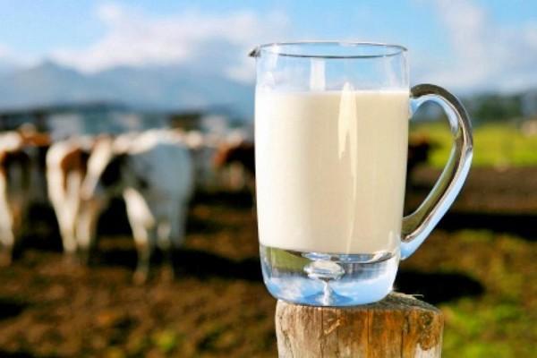 В Россию запретили ввоз молока из Белоруссии