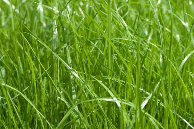 В Смоленской области увеличился сбор многолетних трав