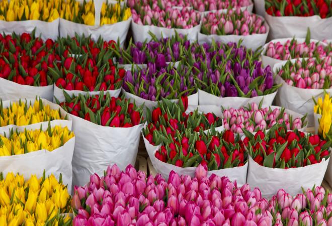 Смоленская область попала в лидеры по экспорту цветов
